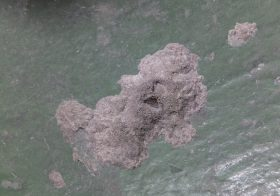 東京都江戸川区の工場床塗装塗替え工事 ケミクリートEPカラー